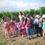 Αμερικανική Γεωργική Σχολή 3 Ιουνίου 2014 011
