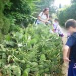 Αμερικανική Γεωργική Σχολή 3 Ιουνίου 2014 017