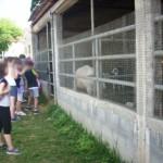 Αμερικανική Γεωργική Σχολή 3 Ιουνίου 2014 022