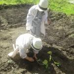 φυτεύοντας λαχανικά