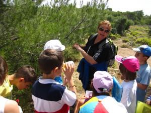 Recognising plants