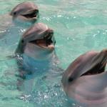 κοινο δελφινι