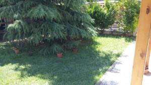 φυτα δήμου (5)