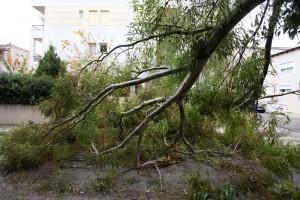 πεσμένο δέντρο