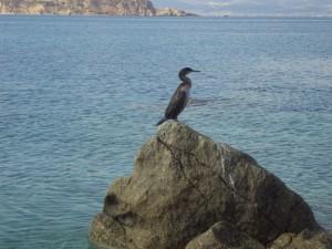 Απολαμβάνει την ηρεμία της θάλασσας!!