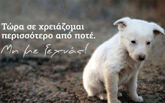 Αποτέλεσμα εικόνας για αδέσποτα ζώα»