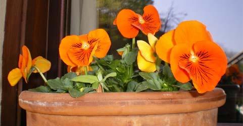 0springflowers.jpg