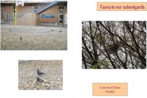 Παρατήρηση ζώα Γαλλία