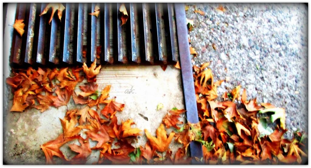 ...φθινόπωρο και στην αυλή...