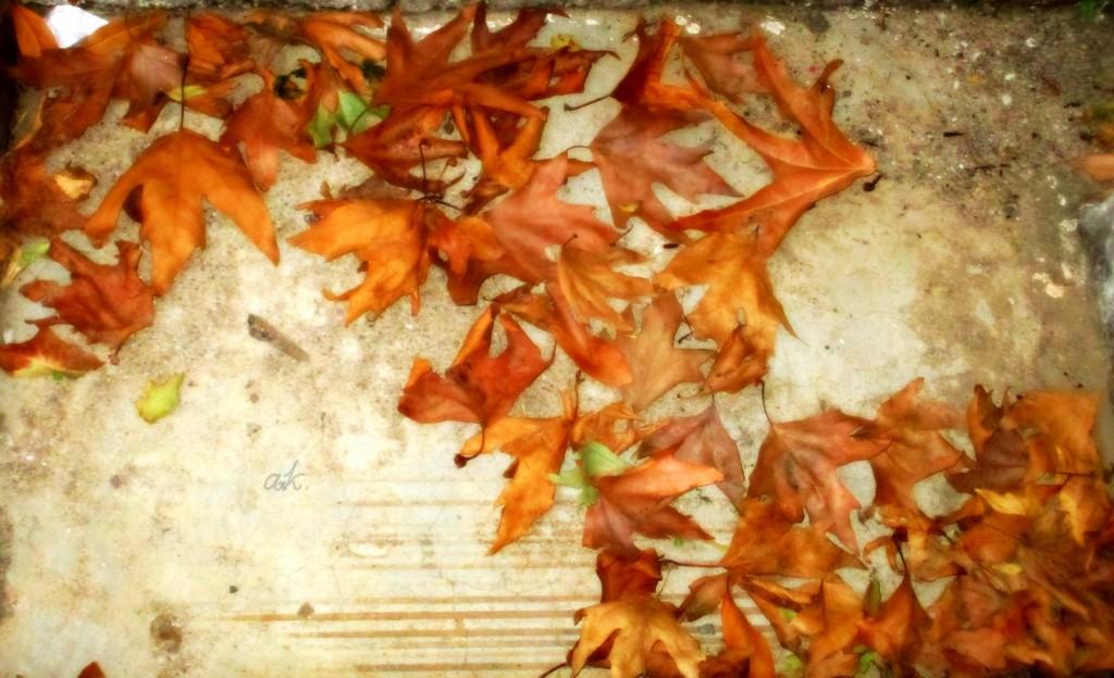 ...φύλλα παντού...