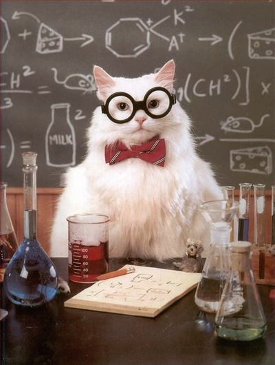 catchem