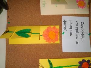 τα  μέρη του λουλουδιού