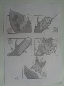 φύλλο εργασίας, ο κύκλος ζωής της πεταλούδας