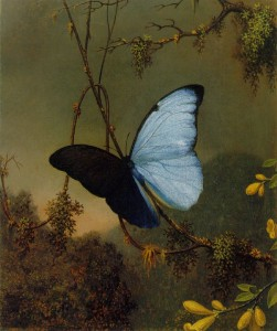 Martin J. Heade (Αμερικανός ζωγράφος του 19ου αι.) Μια μπλε πεταλούδα παίζει με το φως και τη σκιά της.