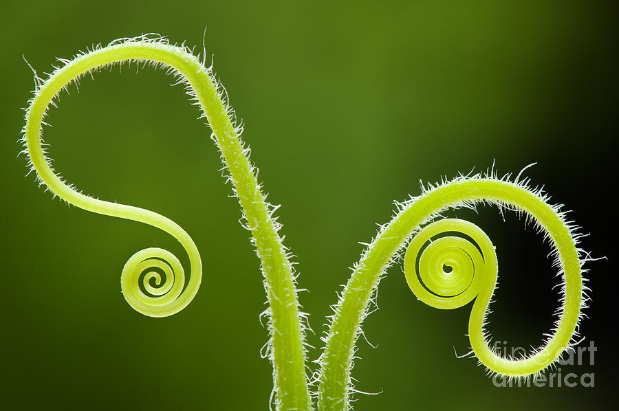 plant-tendrils-tim-gainey