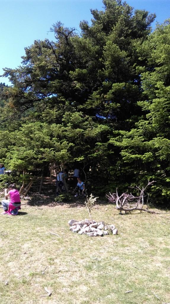 Φτιάξαμε σπιτάκι κάτω από το μεγάλο έλατο και είδαμε ελάφια.