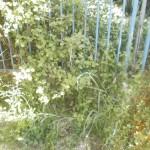 Ο κήπ[ος πριν.