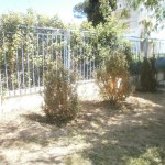 Ο κήπος μετά.