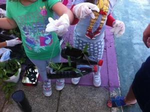 Και τα πλαστικά μπουκάλια έγιναν γλάστρες!