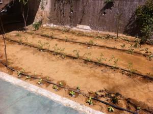 έτοιμος ο κήπος!
