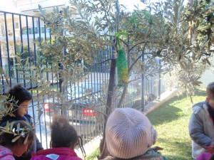 Βρίσκουμε κατάλληλες θέσεις και τις κρεμάμε στα δέντρα της αυλής μας...