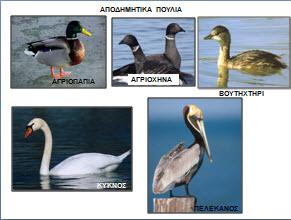 apodimitika-poulia1