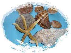 Shells of the Corinthian