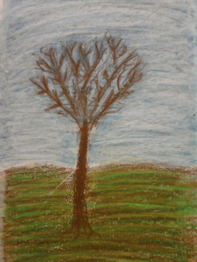 trees seas 007
