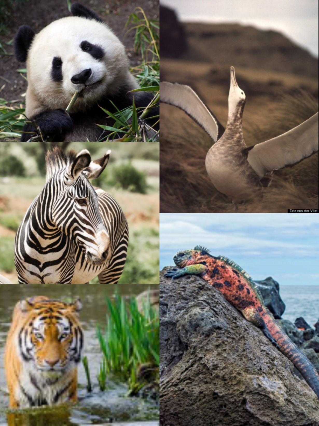 Τι σημαίνει απειλούμενο είδος;