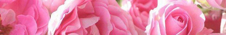regina rosas amat και άλλα τινά