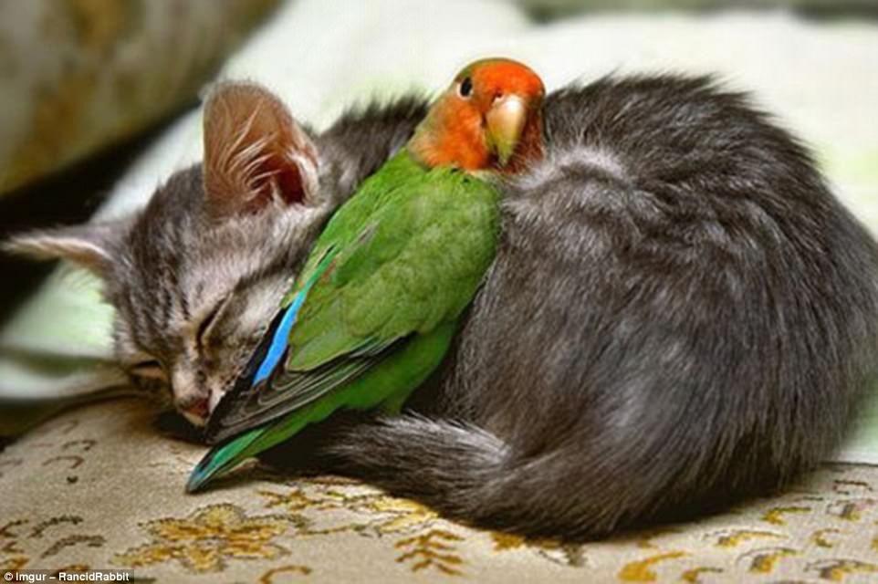 Ο κόσμος των ζώων