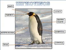 πιγκουίνος...