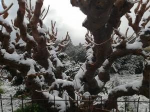 χιονισμένος Φρε