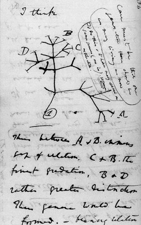 darwin_tree_lg.jpg