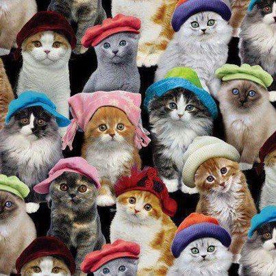 catswithhats