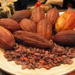 potensi-bisnis-kakao