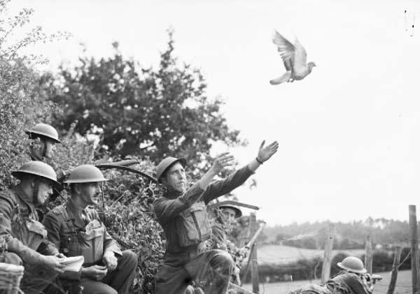 pigeonwar1