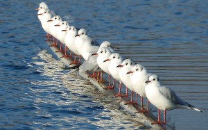 Line-Of-Seagulls