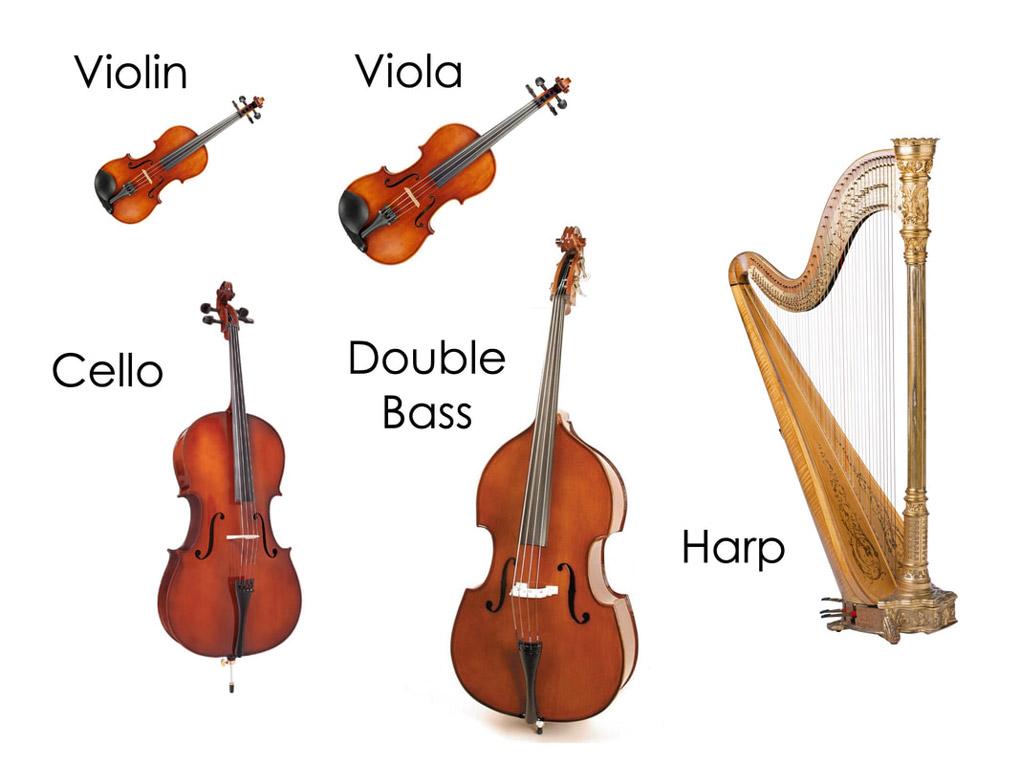 strings family