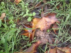 Βρεγμένα φθινοπωρινά φύλλα.