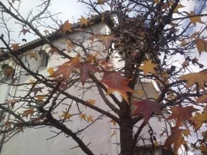 Δέντρα με ξερά φύλλα.