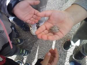 Σαλιγκάρια.