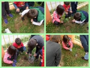 Τα παιδιά φυτεύουν το δέντρο αναλαμβάνοντας τα ίδια όλοκληρη την εργασία.