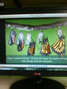 παρατηρούν το κύκλο της ζωής της πεταλούδας στον υπολογιστή
