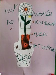 Τα μέρη του φυτού