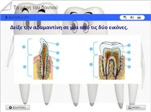 Quiz για τα μέρη του δοντιού