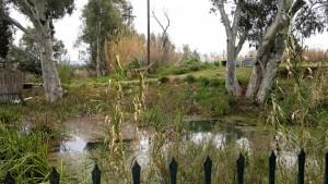 Λίμνη Λέρνη, Μύλοι Αργολίδας