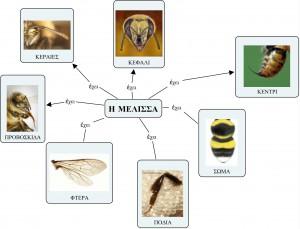 Τί έχει η Μέλισσα 2;