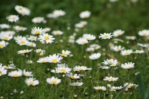 λουλούδια 001