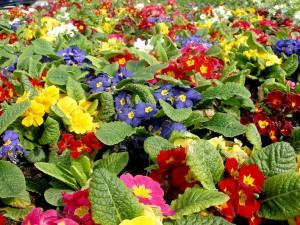 λουλούδια 002